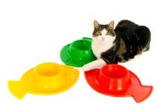 Gatto con le ciotole dell'alimento Fotografie Stock