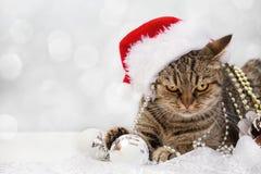 Gatto con le decorazioni di Natale Fotografia Stock Libera da Diritti