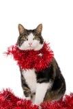 Gatto con le ghirlande di Natale fotografia stock