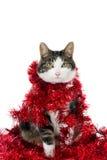 Gatto con le ghirlande di Natale immagini stock libere da diritti
