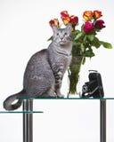 Gatto con le rose Fotografie Stock Libere da Diritti