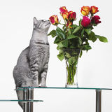 Gatto con le rose Fotografia Stock