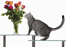 Gatto con le rose Fotografie Stock