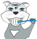 Gatto con lo spazzolino da denti Immagine Stock Libera da Diritti