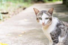gatto con marrone chiaro Immagine Stock Libera da Diritti