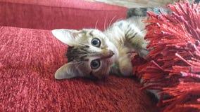 Gatto con rosso Immagine Stock