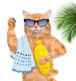 Gatto con sunblock immagini stock