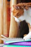 Gatto con un calcolatore Fotografia Stock