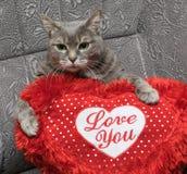 Gatto con un cuscinetto a forma di del cuore immagine stock