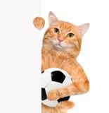 Gatto con un pallone da calcio bianco Fotografie Stock Libere da Diritti