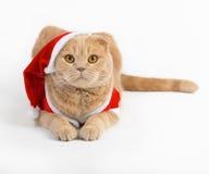 Gatto con un vestito di Natale Immagini Stock Libere da Diritti