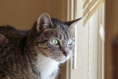 Gatto con una vista Fotografie Stock