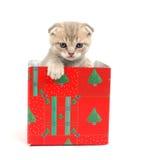 Gatto in contenitore di regalo Fotografia Stock Libera da Diritti