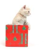 Gatto in contenitore di regalo Fotografie Stock