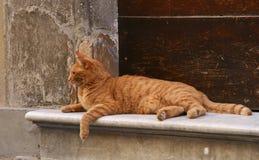 Gatto in Cortona Fotografie Stock Libere da Diritti