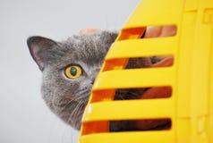 Gatto curioso Fotografia Stock