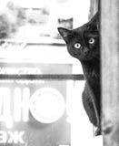 Gatto curioso Fotografia Stock Libera da Diritti