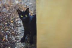 Gatto curioso nel cortile in un giorno piovoso di autunno Fotografia Stock