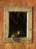 Gatto da una finestra Fotografia Stock