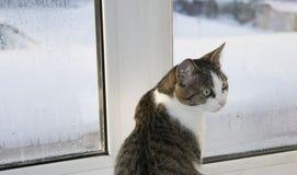 Gatto dalla finestra Fotografie Stock