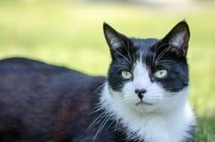 Gatto dalla porta affianco Fotografie Stock