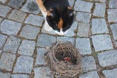 Gatto davanti ad un nido vuoto Immagini Stock Libere da Diritti