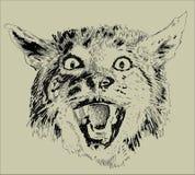 Gatto degli animali Fotografie Stock Libere da Diritti