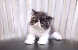 Gatto degli occhi di gatto Immagini Stock Libere da Diritti