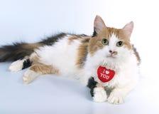 Gatto del biglietto di S. Valentino di Tricoloured Fotografia Stock Libera da Diritti