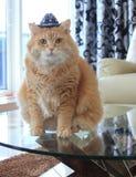 Gatto del biscotto con il cappello da cowboy Fotografia Stock