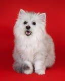 Gatto del cane Fotografie Stock