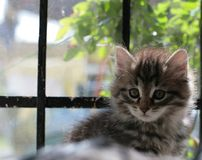 gatto del cucciolo Immagini Stock Libere da Diritti