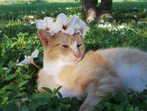 Gatto del fiore Immagini Stock