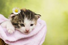 Gatto del gattino che si siede in un canestro Fotografie Stock Libere da Diritti