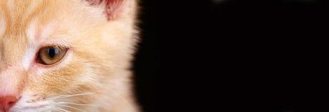 Gatto del gattino dello zenzero fotografia stock