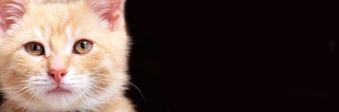 Gatto del gattino dello zenzero immagine stock libera da diritti