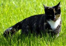 gatto del huntig Fotografie Stock Libere da Diritti