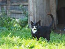 Gatto del paese Fotografie Stock