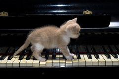 Gatto del piano Fotografia Stock