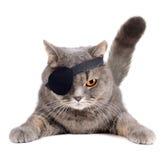 Gatto del pirata Fotografia Stock