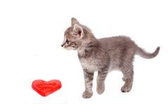 Gatto del pussy del biglietto di S. Valentino Fotografia Stock Libera da Diritti