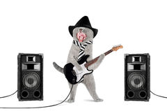 Gatto del rock star Immagine Stock