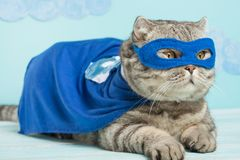 gatto del supereroe, Whiskas scozzese con un mantello e una maschera blu Il concetto di un supereroe, gatto eccellente, capo immagine stock