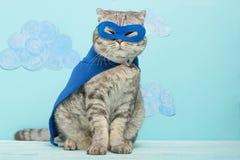 gatto del supereroe, Whiskas scozzese con un mantello e una maschera blu Il concetto di un supereroe, gatto eccellente, capo immagini stock