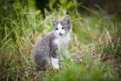 Gatto del vagabondo Fotografia Stock