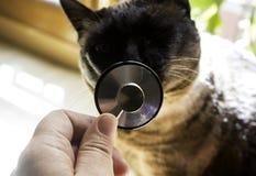 Gatto del veterinario di auscultazione Immagini Stock Libere da Diritti