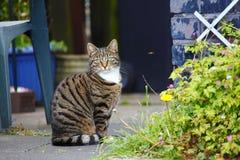 Gatto dell'animale domestico in giardino Fotografia Stock Libera da Diritti