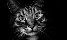 Gatto dell'animale domestico in ombre Fotografia Stock