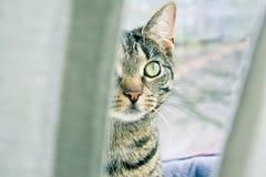 Gatto dell'inseguitore Fotografia Stock Libera da Diritti