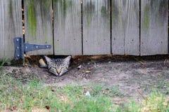 Gatto dell'intruso del cortile Fotografia Stock Libera da Diritti
